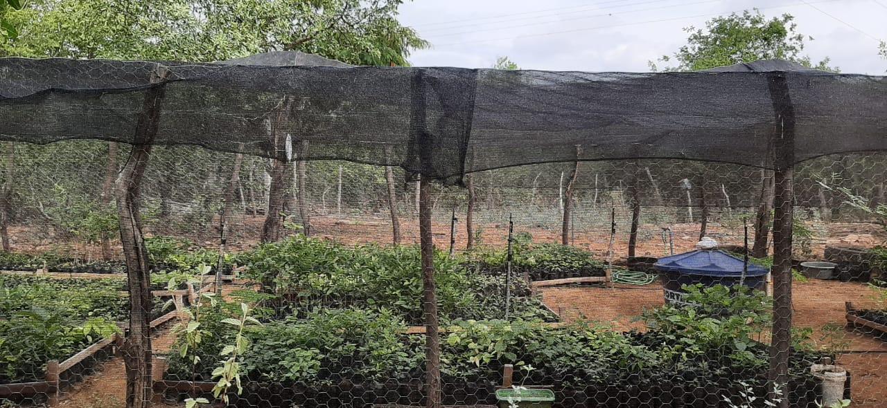 Viveiro experimental iniciado por 3 irmãs é referência no Sertão de Pernambuco e terá apoio do InterCidadania.